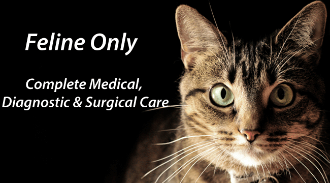 Cat Clinic Plymouth Ma