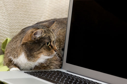 online resources for cats