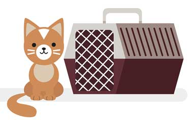 Do you have trouble getting your cat into the carrier? We have some great advice