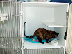 cat condo at the cat clinic, serving plymouth, duxbury, kingstwon and carver, ma.
