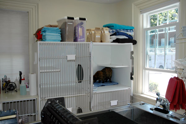cat clinic plymouth cat accomadations