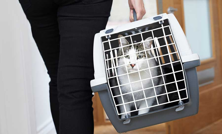 carrying cat in carrier